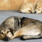 Град Скопје да воведе категорија старател за бездомни кучиња – Анима мунди