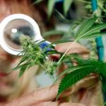 Предложени измени во Законот за контрола на опојни дроги и психотропни супстанции