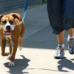 Изречени првите казни за сопственици на кучиња