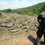 """Нови кривични пријави во рамки на оперативната акција """"Гора"""""""