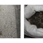 Во куќа во тетовско Шипковица пронајдени насади со канабис