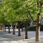 Предложено е донесување на Закон за зеленило