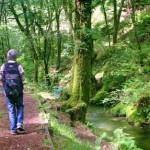 Забраната за движење во шума до 5 август, казните 2000 евра