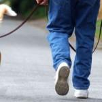 Законски обврски за чување домашен миленик и глоби за нивно непочитување