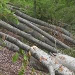 Незаконски издал 22 одобренија за сеча на шума без комплетна документација