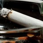 Отстранување на рестрикциите за пушење на летни терси и бавчи – Предлог измени