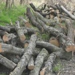 Кривична пријава за две лица-бесправно исечени 187 метри кубни државна шума