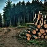 Албанија воведе десетгодишна забрана за сечење на шумите
