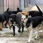 Правно мислење на Врховниот суд за надомест на штета причинета од каснување на куче скитник