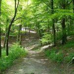 Воведено ограничување за движење во шумите – глоба од 1500 до 2000 евра