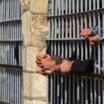 Турција ќе ослободи 38 илјади затвореници за да направи простор за уапсените во пучот