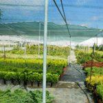 Казни до 8.000 евра за непочитување на откупните цени на градинарските производи