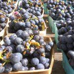 Предложени измени во Законот за виното
