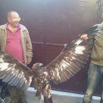 Кривични пријави за две лица што се сликале со ендемичен орел