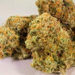Спречен шверц на 14,5 килограми марихуана кај село Богородица