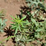 Запленети пола тон дрога во Албанија