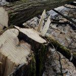 Кривична за охриѓанецот што повреди дете со сечење дрво