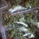 Во Холандија уапсен Албанец во обид  за шверц на 647 килограми марихуана