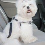 Законски ограничувања за превоз на миленици во автомобил