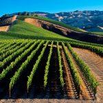 """Управителот на """"ВВ Повардарие"""" нелегално продавал вино во вредност од 30 милиони денари"""
