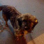 Кривична пријава за убиецот на кучето Идриз