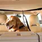 Документација потребна за пренесување домашен миленик преку граница