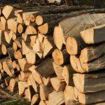 Вработен во Шумско Стопанство издавал лажни одобренија