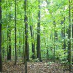 Глоба од 1.500 и 2.000 евра за движење во шума без соодветна дозвола