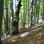 Забрана за целосно движење во шумите