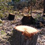 """Акција """"Гора"""": Уште шест лица добија кривична пријава за пустошење шуми"""