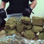 Пронајдени 60 килограми марихуана на патот Струга-Охрид