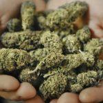Кривични против двајца мажи за неовластено производство на дроги