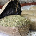 Италија заплени половина тон дрога пристигната од Албанија