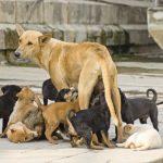 ДОМ предлага глоби од 700 евра за негрижа на кучињата