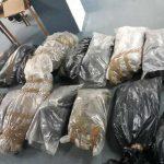 Штипската полиција заплени рекордни 77 килограми марихуана