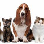 Со законски измени до намалување на бројот на бездомни кучиња и мачки