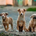 Седумнаесет здруженија за заштита на животните бараат законски измени