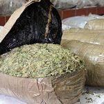 Во Грција запленети 6,5 тони канабис и 258.000 таблети