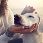 Рокот за вградување микрочипови кај домашните миленици е продолжен до крајот на годината