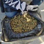 Албански државјанин фатен на Табановце со 350 килограми марихуана