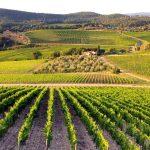 МЗШВ: Со измените на Законот за земјоделско земјиште до правилна распределба на државното земјоделско земјиште