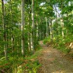 Се укинува забраната за движење во шуми