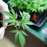 Што содржи новиот предлог Закон за контрола на опојни дроги и психотропни супстанции