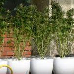 Приведен маж од Булачани, пронајдена лабораторија за производство на марихуана