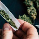 Приведени четворица скопјани во Градскиот парк кои биле фатени со марихуана