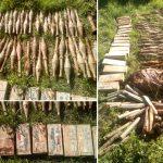 Пронајдено оружје и муниција во струшко