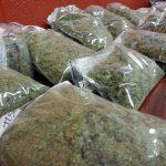 Пронајдена марихуана во Тетовско, приведени две лица