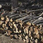 Откриени 50 метри кубни бесправно исечени огревни дрва во Берово